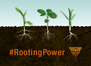 Rooting Power