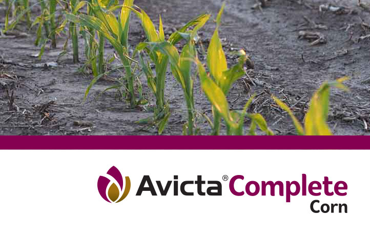 Avicta Complete Corn with Vibrance