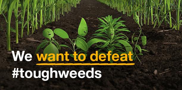 blankweeds