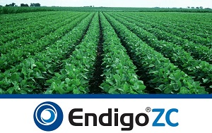 Endigo ZC Soybean