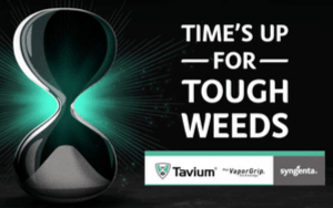 Tavium the clock is ticking graphic