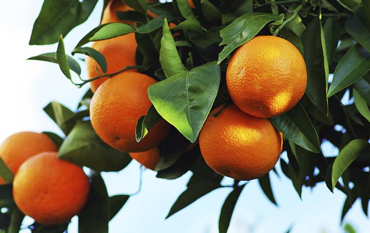 Minecto Pro Citrus