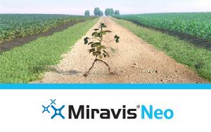Miravis-Neo