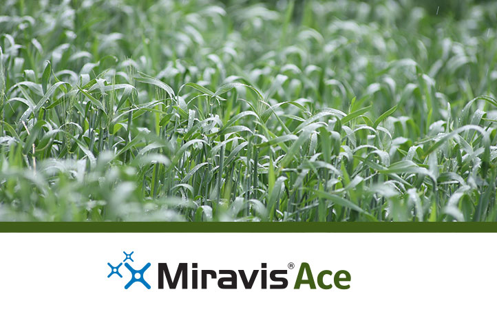 Get More Time with Miravis Ace
