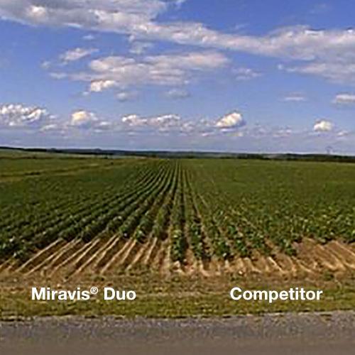 Miravis Duo in a potato field