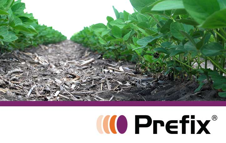 Prefix in Soybeans