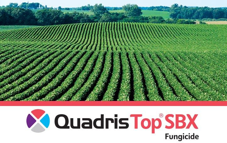 Quadris Top SBX
