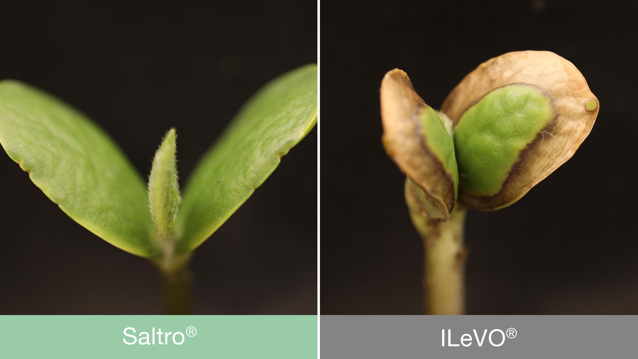 Syngenta announced newest seed treatment | Syngenta US