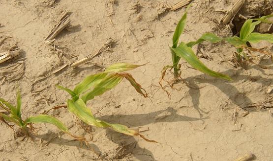 Are Your Soils Lacking Boron, Manganese or Sulfur? | Golden