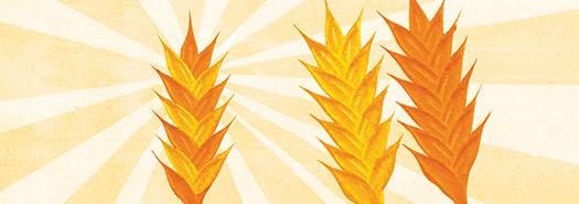 The Future of Wheat Hybrids