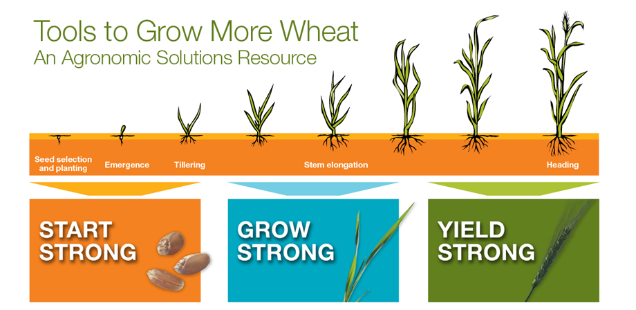 Tools to Grow More Wheat (TGMW) Resource Center