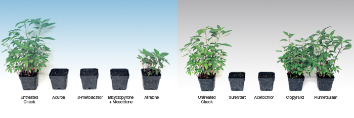 More modes of action in Acuron fully provided control of waterhemp, while only one of the modes of action in SureStart provided effective control