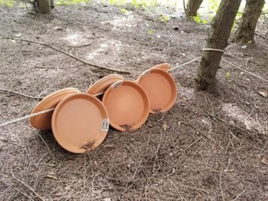 Clay Saucers