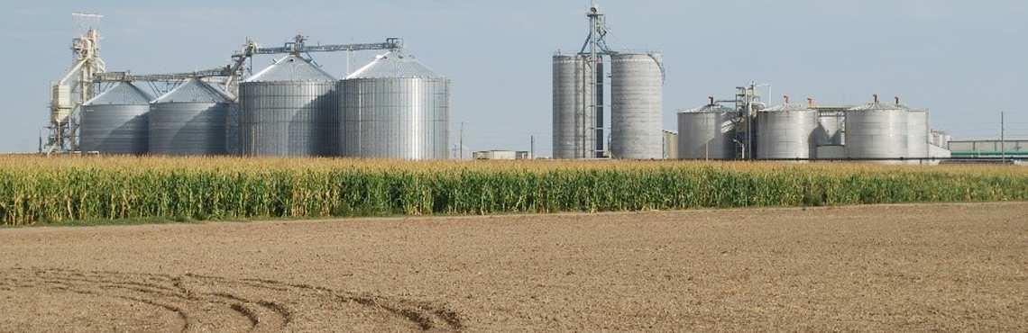 Ethanol production corn