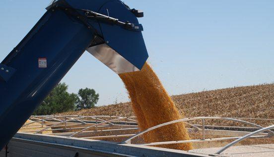 ethanol production corn seed