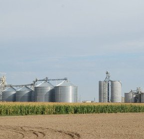 Ethanol production corn