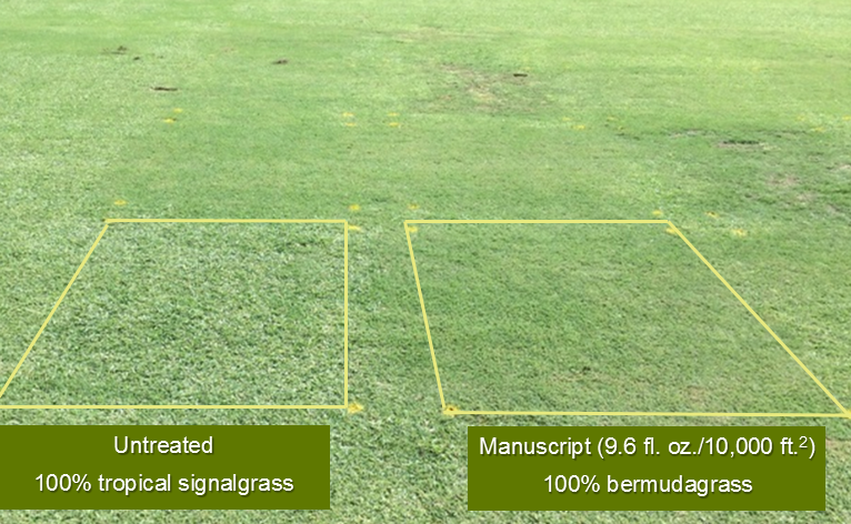 Manuscript vs. untreated grass