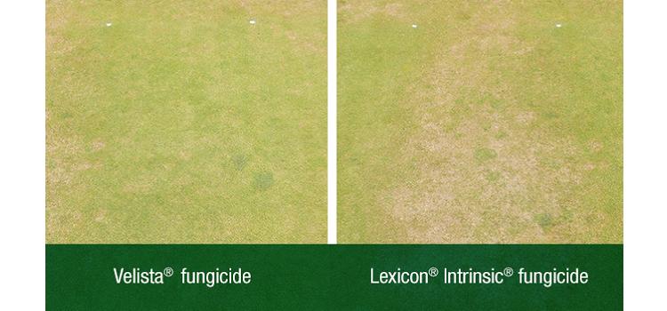 Velista vs Lexicon Zoomed In