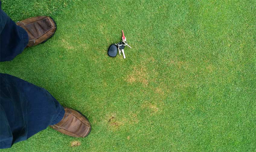 Annual bluegrass weevil damage on a putting green