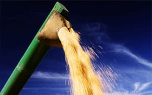Enogen corn for ethanol