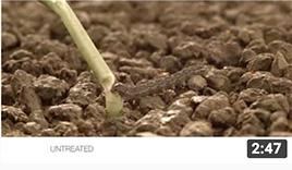 video thumbnail of Le traitement de semences Fortenza vous aide à lutter contre les vers-gris