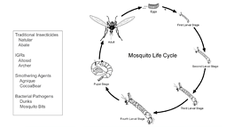 Webinar: FAQs about Mosquito Control