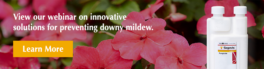 Segovis rotation program for long-lasting control of downy mildew and phytophthora spp banner
