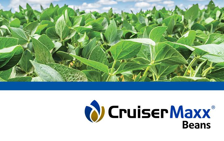 CruiserMaxx Beans with Vibrance