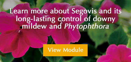 Segovis controls downy mildew and phytophthora spp banner
