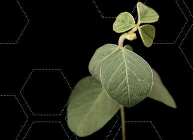 Soybean Hero