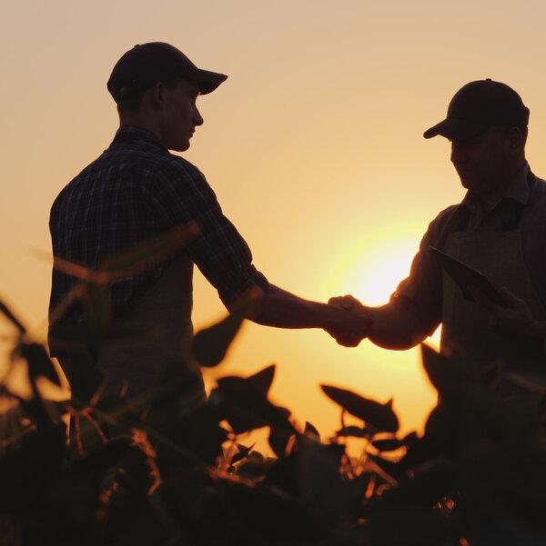 Fermier dans un champ de soya