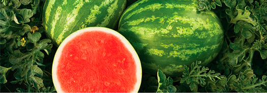 Syngenta Watermelon Program
